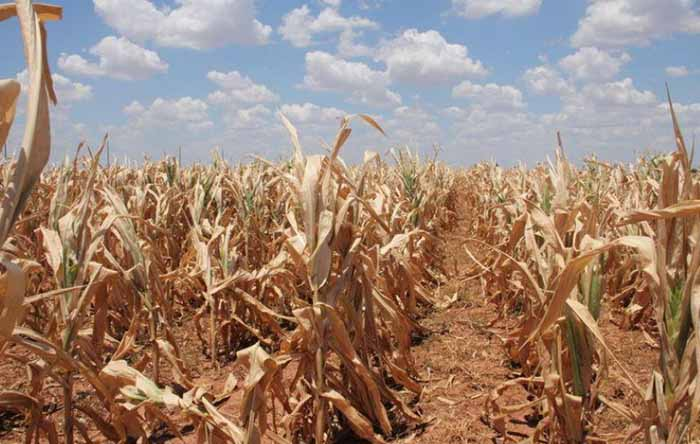 How can climate change affect agriculture